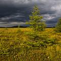 Golden Plains by Irwin Barrett