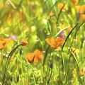 Golden Poppies In A Gentle Breeze  by Saija Lehtonen