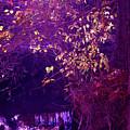Golden Purples by Nina Fosdick
