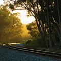 Golden Rails  9559l by Stephen Parker