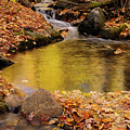 Golden Reflections In A Stream On The Blanchet Trail Gatineau Pa by Reimar Gaertner
