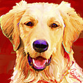 Golden Retriever 3 by Jackie Jacobson