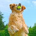 Golden Retriever Catch The Ball  by Jennie Marie Schell
