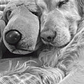 Golden Retriever Dog And Friend by Jennie Marie Schell
