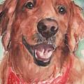 Golden Retriever Dog In Watercolori by Maria Reichert