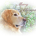 Golden Retriever Dog Merry Christmas Card by Jennie Marie Schell