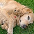 Golden Retriever Dog Teddy Bear Love by Jennie Marie Schell