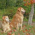 Golden Retriever Dogs In Autumn by Jennie Marie Schell