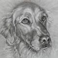 Golden Retriever Drawing by Susan A Becker