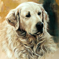 Golden Retriever by Gerard Mineo