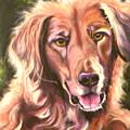 Golden Retriever More Than You Know by Susan A Becker