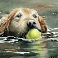 Golden Retriever Swimming by David Rogers