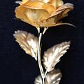 Golden Rose 1 by Sladjana Lazarevic