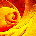 Golden Rose by Francesa Miller