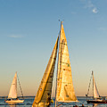 Golden Sails by Tom Dowd