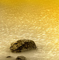 Golden Silence by Charuhas Images