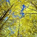 Golden Sky by Barbara Stellwagen