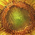 Golden Spiral Seed Arrangement by Daliana Pacuraru