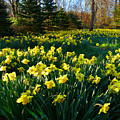Golden Spring Carpet by Dianne Cowen