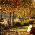 Golden Sunlight Rangeley Maine by Jeff Folger