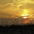 Golden Sunrise  by Denise Winship