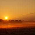 Golden Sunrise by Pamela Walton