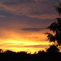 Golden Sunset 2 by Carol Lynch