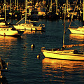 Golden Sunset On Boats by Roberta Byram
