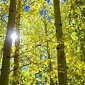 Golden Sunshine by Barbara Stellwagen
