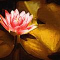 Golden Swamp Flower by Paul Bartoszek