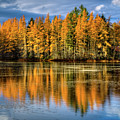 Golden Tamarack Reflections by David Patterson