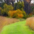 Golden Trail by Cedric Hampton