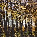 Golden Trees 1 by Carol Lynch