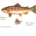 Golden Trout And Elk Hair Caddis Fly by Daniel Lindvig