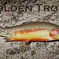 Golden Trout by Kelley King