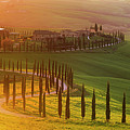 Golden Tuscany by Rob Davies