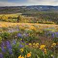 Golden Valley by Mike  Dawson
