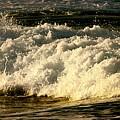 Golden White Wave by Debra Banks