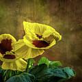 Golden Yellow Pensamientos by Peter Hayward Photographer
