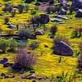 Goldenfield Hillside by Garry Gay