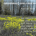 Goldenrod By Definition Kentucky by Sharon Popek