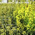 Goldenrod By Definition Nebraska by Sharon Popek