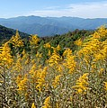 Goldenrod Mountain View by Alan Lenk