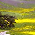 Goldenrod Oak Santa Ynez California 2 by Barbara Snyder