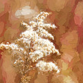 Goldenrod Plant In Fall by Les Palenik