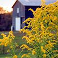 Goldenrod by Sam Davis Johnson