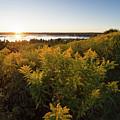 Goldenrod Sunset, Portland, Maine #40019 by John Bald