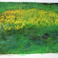 Goldenrods In Field by George Ferrell