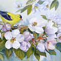 Goldfinch And Crabapple Blossoms by Janet Zeh