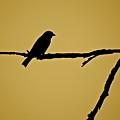Goldfinch by Diana Hatcher